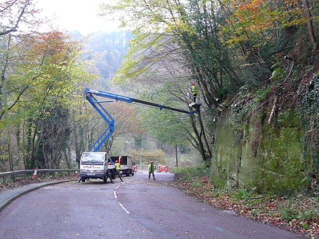 tree_cutting_new_road_alton_-_geograph-org-uk_-_1600862